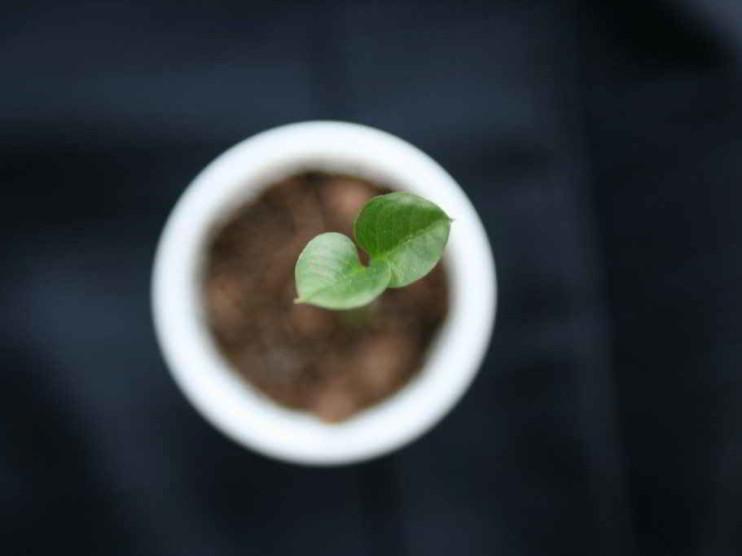 Los valores como base del crecimiento empresarial