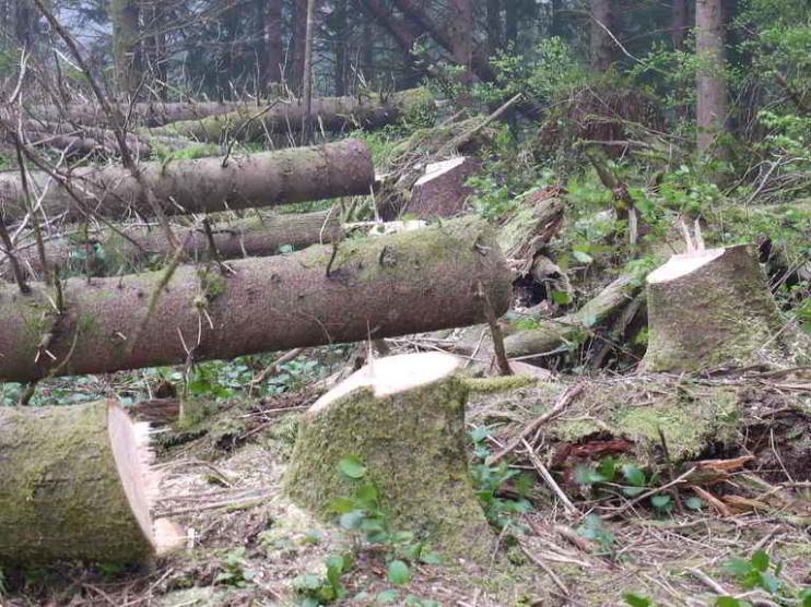 Contabilidad socioeconómica y problemática ambiental
