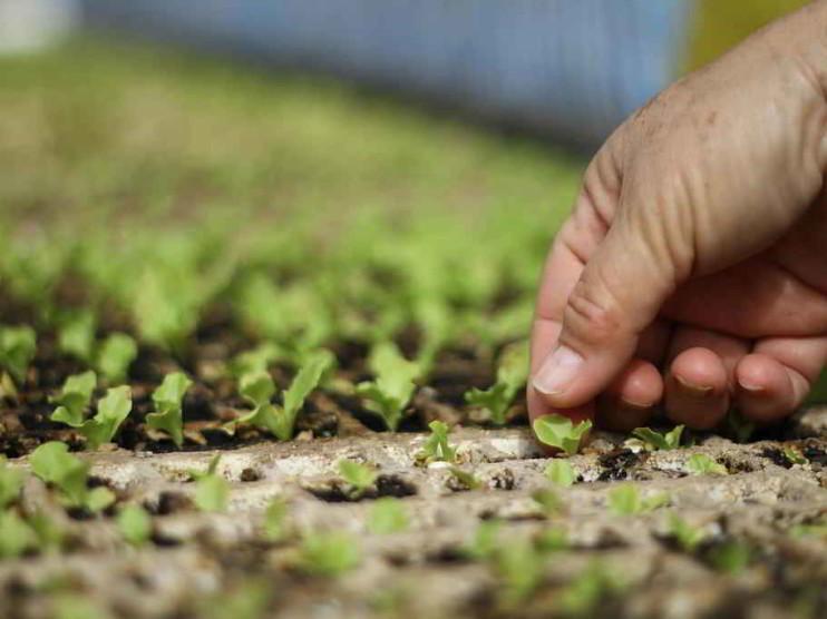 Impacto del Plan Colombia en la agricultura Colombiana