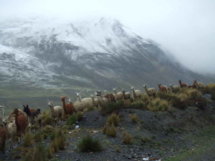 Reflexiones sobre las políticas agrarias en Bolivia