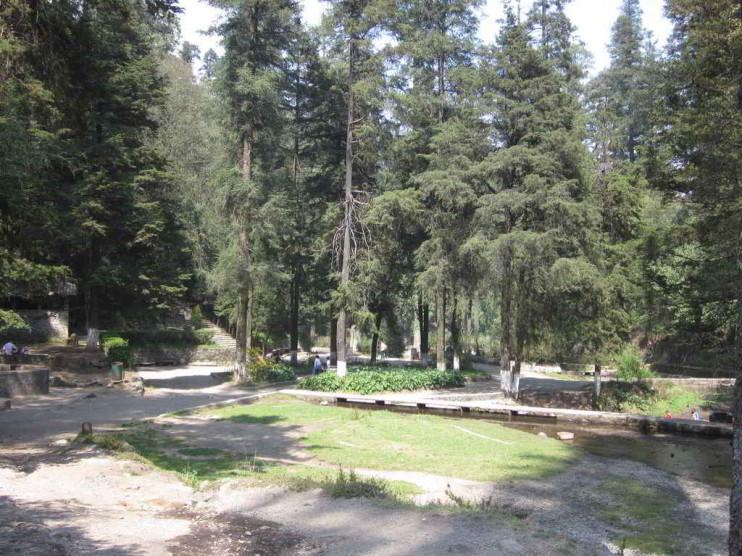 Sector forestal en México