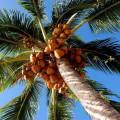 Análisis microeconómico del mercado de bienes alimentarios en una provincia cubana