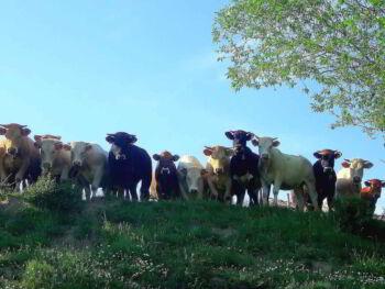 Estudio de la mezcla de marketing de una empresa chilena del mercado de las carnes