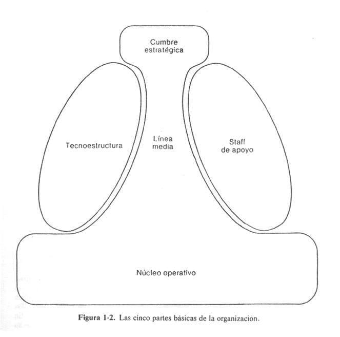 Las cinco partes básicas de la organización