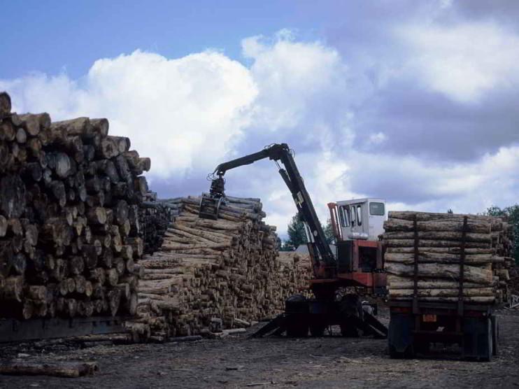 Mercadeo agropecuario para la exportación de productos agropecuarios y forestales