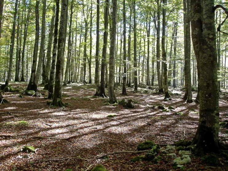 Una plaza de mercado internacional de servicios ambientales