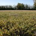 Sector agropecuario Argentino y su importancia en la economía nacional