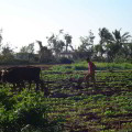 Sector agropecuario de la región de Cienfuegos en Cuba