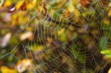 ¿Qué es Network Marketing o Mercadeo Multinivel?