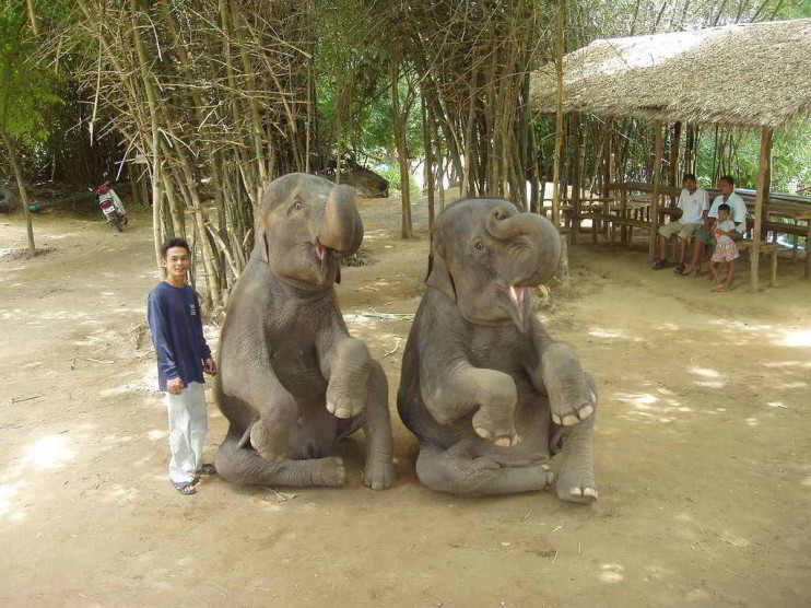 El club del elefante y la gestión del conocimiento