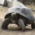 Plan de manejo del Parque Nacional Galápagos Ecuador
