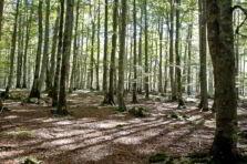 Indicadores ambientais como sistema de informação contábil