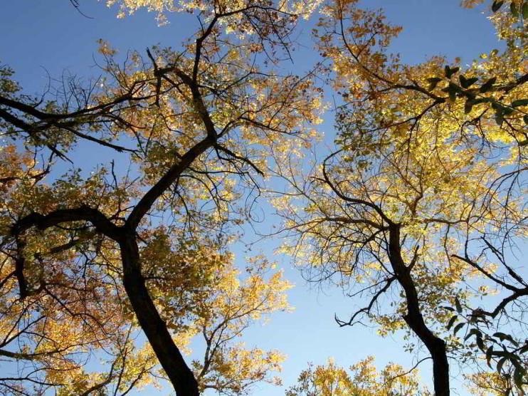 A contabilidade como instrumento de gestão ambiental