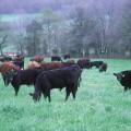 Agricultura y ganadería orgánica