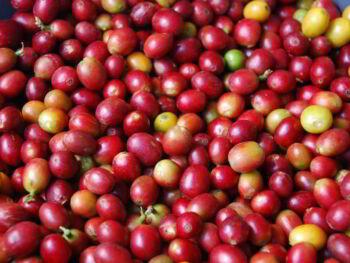 Modelo de las cinco fuerzas de Michael Porter para analizar la industria del café en México