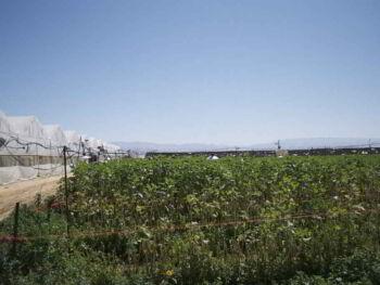 Estructura económica del Moshav ovdim en Israel para el desarrollo agrícola