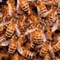 Swarming y tecnologías en colaboración