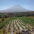 Estudios sobre la agricultura en el Perú