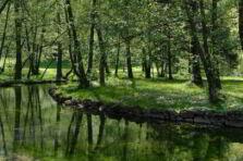 Responsabilidad administrativa ambiental como institución jurídica