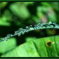 La organización ASE: armonía, simplicidad y equilibrio para la excelencia