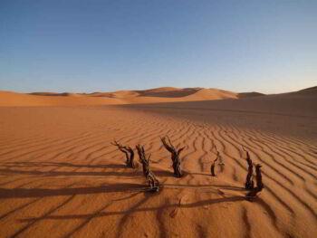 Calentamiento global y protección del medio ambiente. Opinión