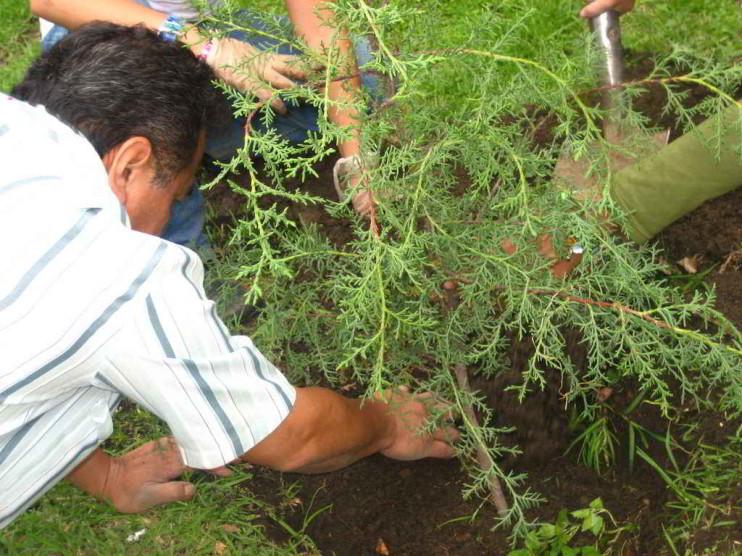 Programa en incentivos forestales en República Dominicana