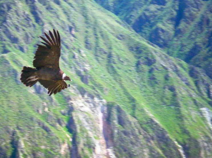 Uso de las transferencias intergubernamentales en Perú
