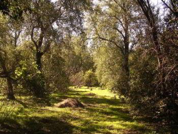 Diagnóstico de áreas críticas del área natural San Diego La Barra El Salvador