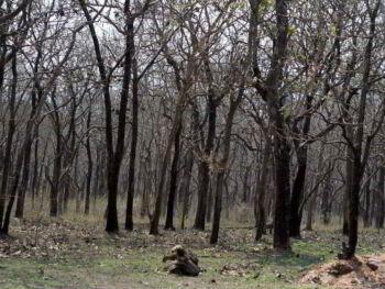 Diagnóstico del área crítica DAC del parque nacional Juan Bautista Pérez Rancier Valle Nuevo República Dominicana