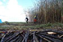 Diseño y gestión de la cadena de suministro de los residuos agroindustriales de la caña de azúcar
