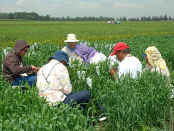 Propuestas de la red de políticas de empleo en Perú