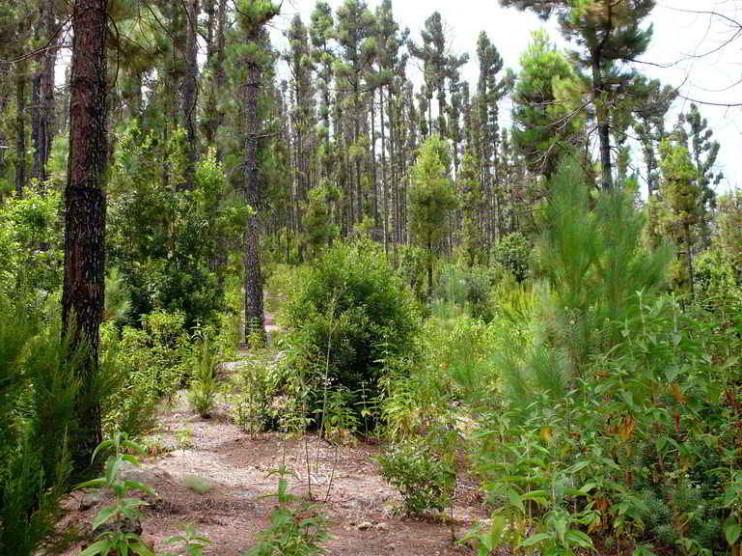 Caracterización socioeconómica rápida de un parque nacional dominicano