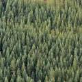 Incentivos para el manejo de bosques en Loreto Perú