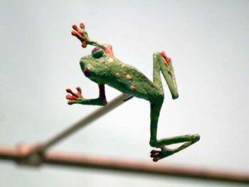 Prospectiva del mundo basada en la biodiversidad y el conocimiento