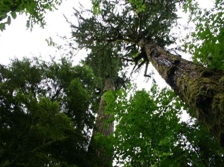 Desarrollo y manejo de bosques secundarios latifoliados