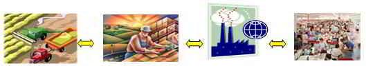 manejo-de-la-cadena-de-suministro-donde-compiten-los-negocios-hoy1