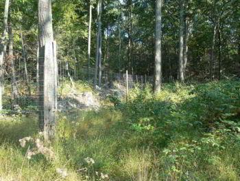 Plan de manejo forestal y silvicultura en la región de Guazapa y Tenancingo El Salvador