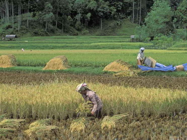 Cadenas de suministro del sector agropecuario y TLC en Colombia