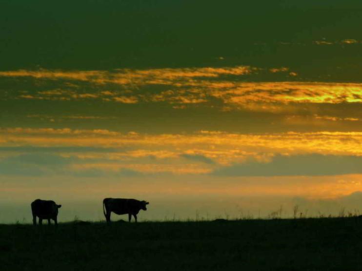 Características de las cadenas agroindustriales