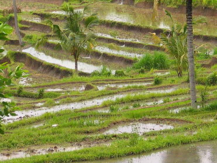Historia y antecedentes de la economía ambiental