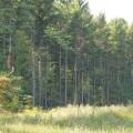 Proyecto de fortalecimiento forestal comunitario en Guatemala