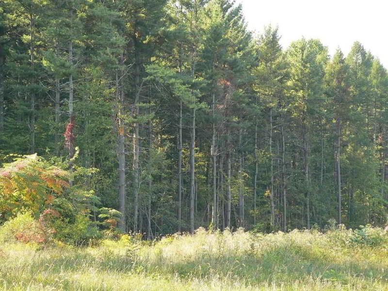 proyecto de fortalecimiento forestal comunitario en