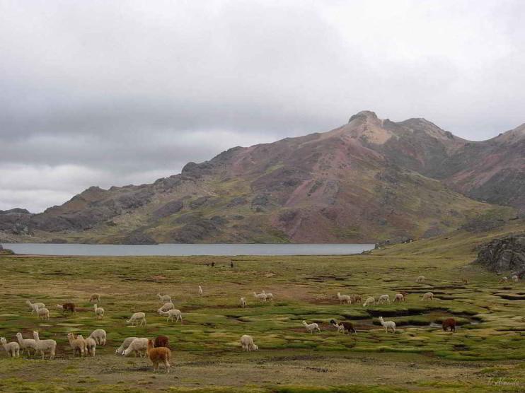 Desarrollo rural y migración en Huancavelica Perú