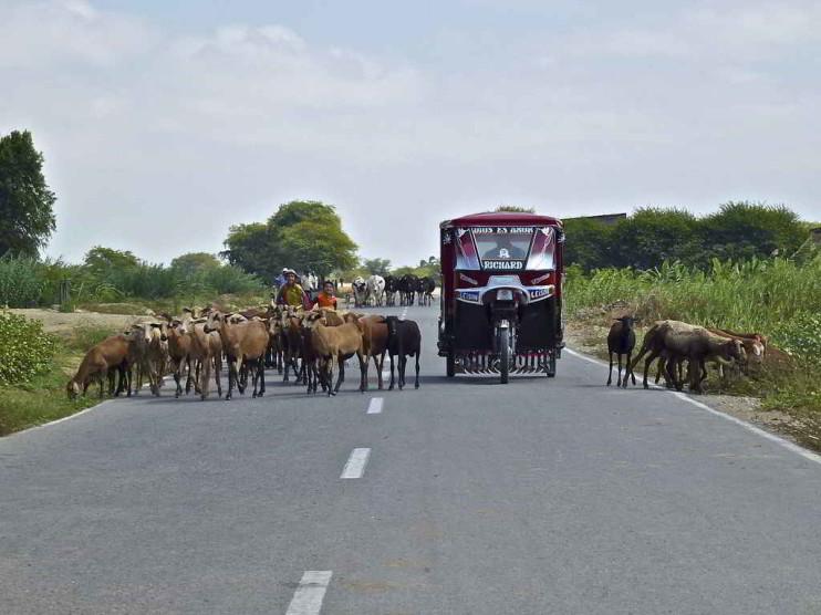 Microcrédito rural en Piura Perú