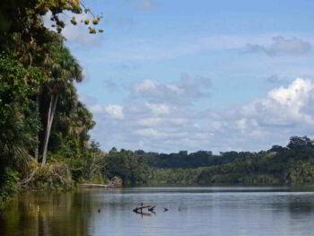Concesiones forestales en el Perú