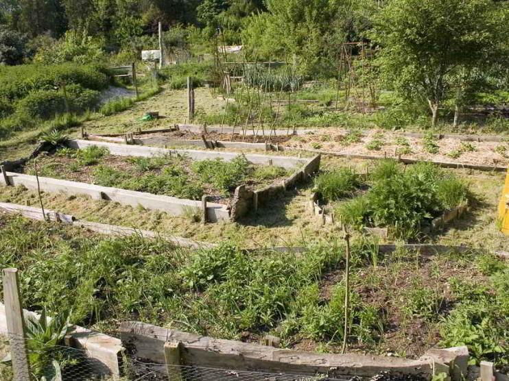 Desarrollo sostenible y corredores biológicos en zonas de amortiguamiento