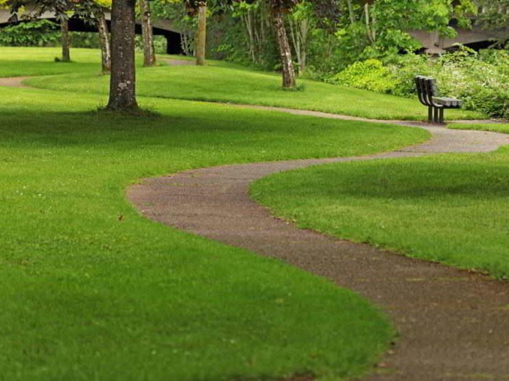 Estrategia de la simplicidad y el camino natural