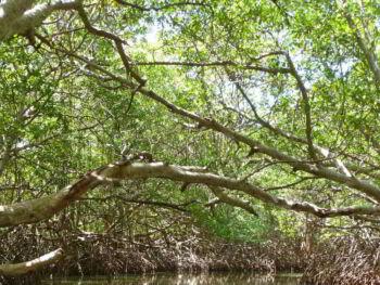 Gestión del parque nacional Los Andes CATIE-FIADES El Salvador