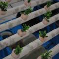 Digitalización de una entidad agropecuaria en una universidad peruana
