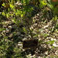 Cultivos ilícitos en el valle del Rio Apurímac Perú